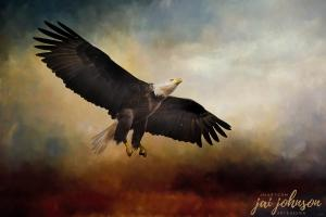 New Bald Eagle Art Long Way To The Top
