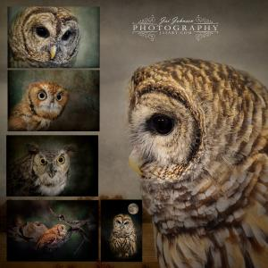 Jai Johnson Releases Six New Owl Images